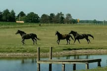 There are always horses around! Haul in your own to enjoy local trails or to have a place to rest & stall your horses when passing through.