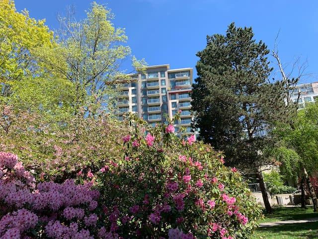 Richmond center park apartment