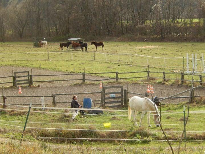 100 qm Loft auf Pferdehof