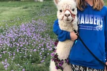 A walk in the wildflowers with Miguel.