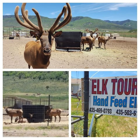 Local elk ranch down the road that gives tours. You can even feed the elk.