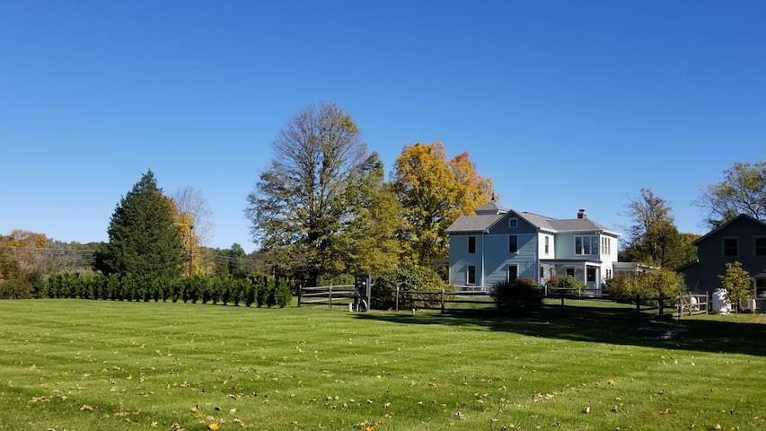 Stunning side lawn perfect for group sports and laying out in the Sun!