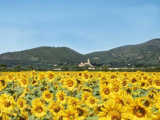 Sun Flower farmhouse
