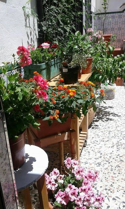 Patio in spring