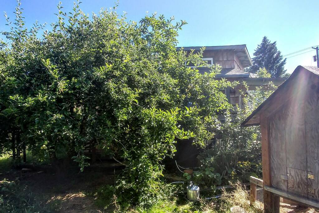 South side view from within property..and a well producing apple tree!