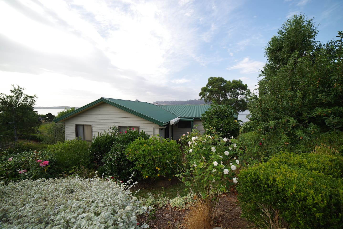 Front of house - rose garden and fruit trees