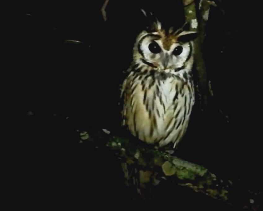 Un visitante nocturno.