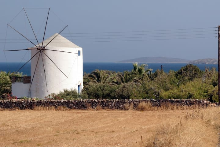 Rustic windmill sourrounded by an olive grove - Antiparos