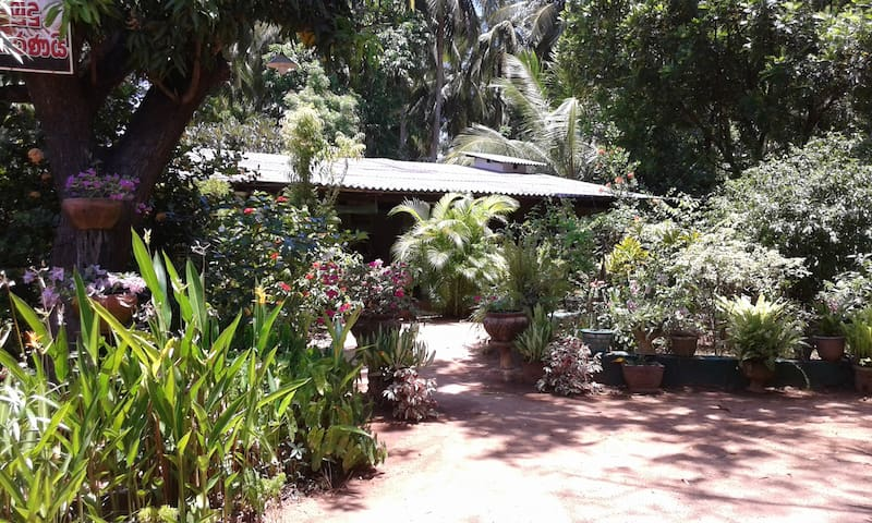 Nilmini B&B Twin Non AC Room Sigiriya Town Centre - Sigiriya - Hus