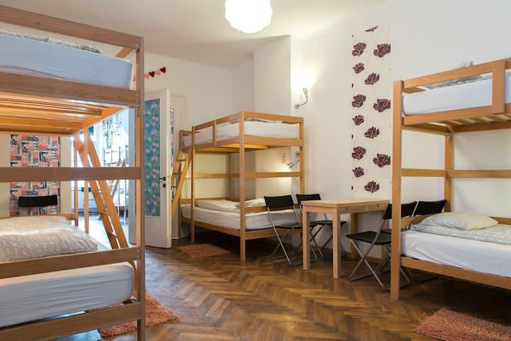 Hostel : Bed in heart of city Brasov-Centrum HOUSE