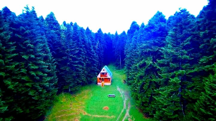 Forest Cabin Abies