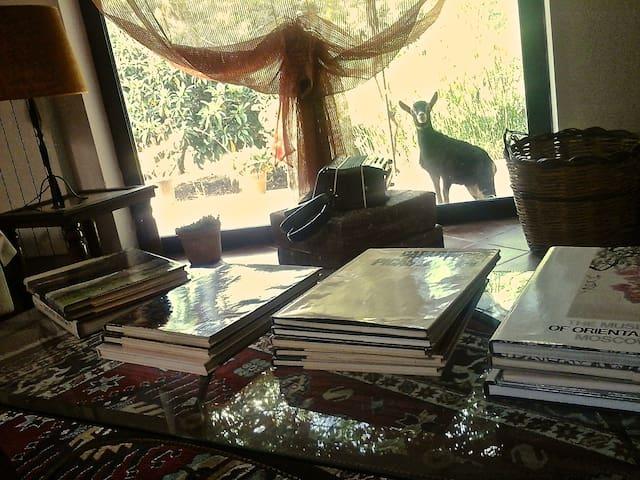 Broken zero artistic residence and organic farming - Villa Convento - Huis