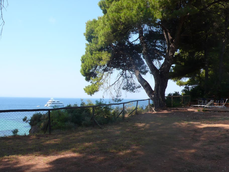 View to the sea sitting under the pine trees