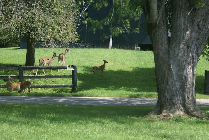 Some of the local deer eating our apples and pears.