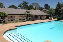 Your 10m Pool in secluded private north facing back garden.