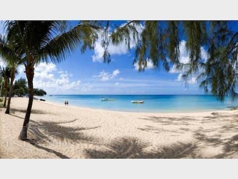 Barbados Dreaming