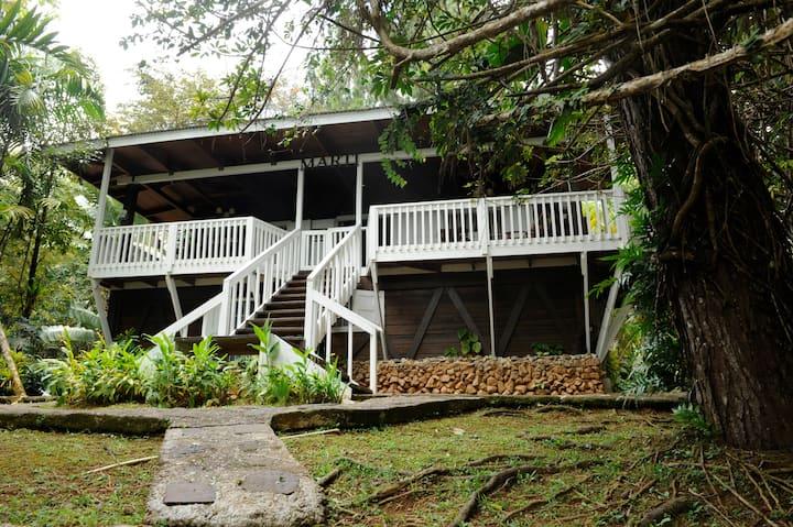 Villa Pitirre : a rain forest getaway.