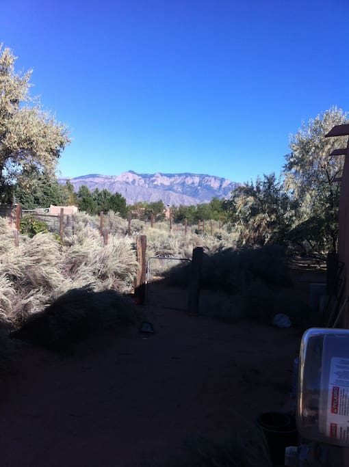 back yard view of Sandia mountains