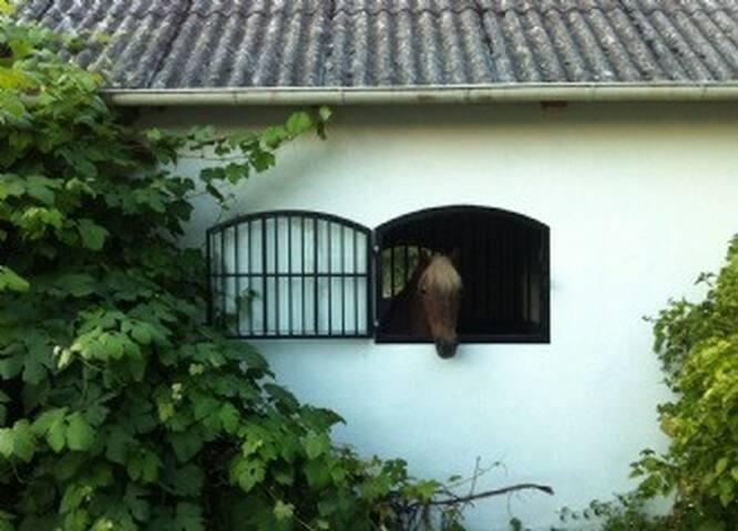 Charmigt hus på hästgård vid naturreservat - Ödåkra - เกสต์เฮาส์