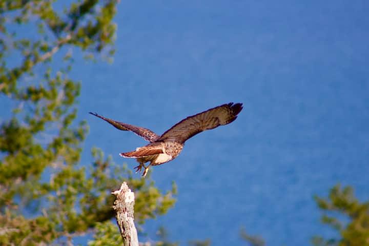 Amazing local birds