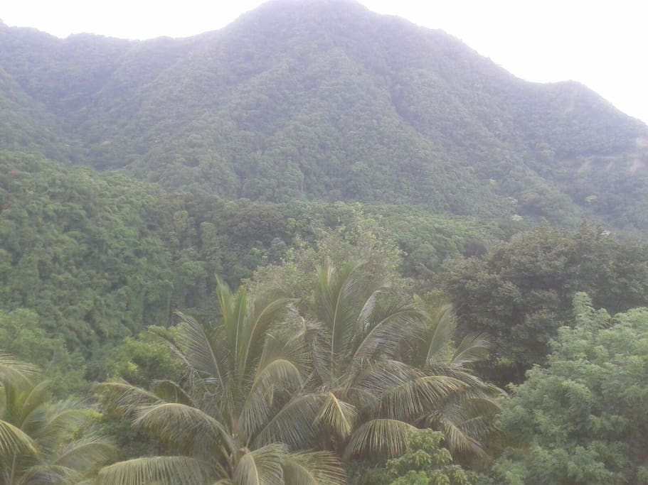 lush, green mountain close by