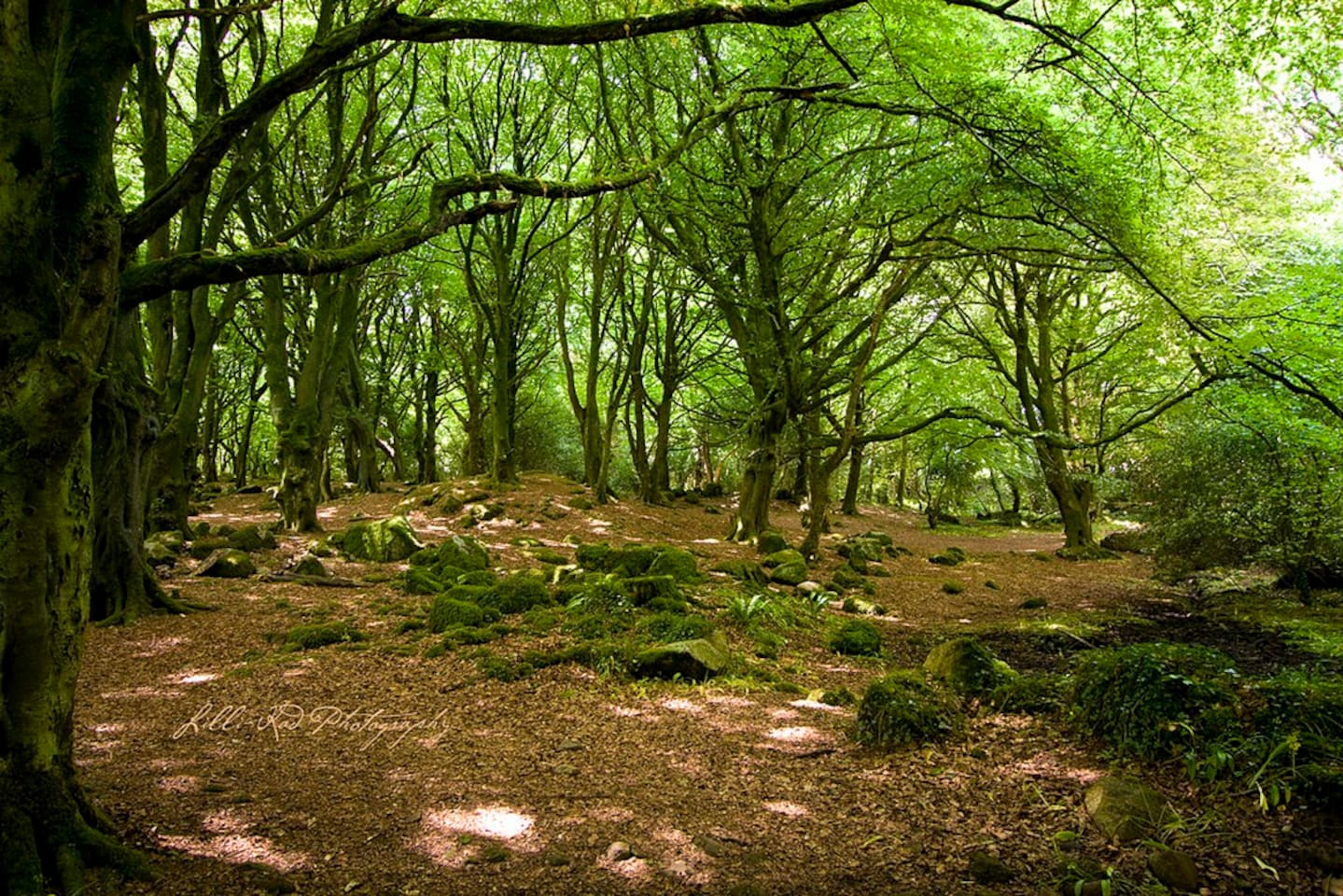 Beautiful and ancient Bearna Wood a 5 minute stroll away.