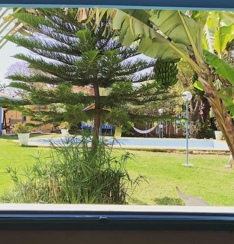 Bel appartement F2 dans un jardin tropical