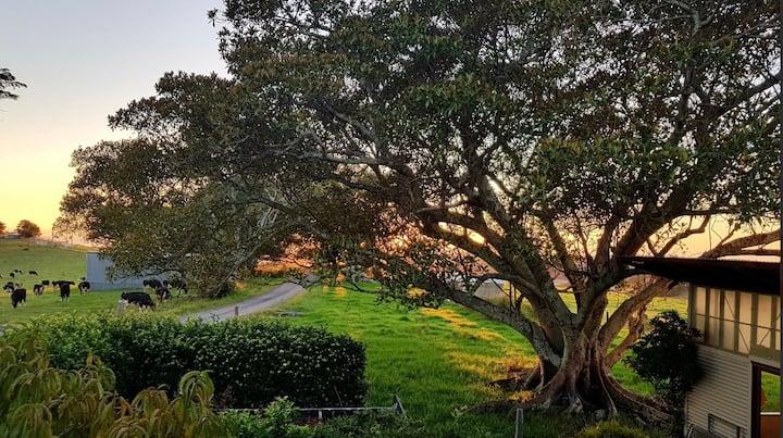Stony Hill Treetops  -   Beautiful Home & Location