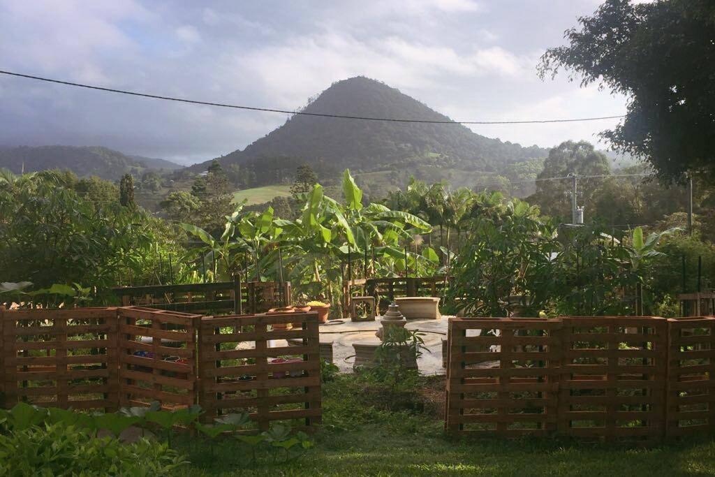 Pinbarren Mountain rising behind our vegetable garden.