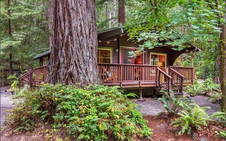 Romantic creekside cedar cabin nestled in a redwood forest - Guerneville
