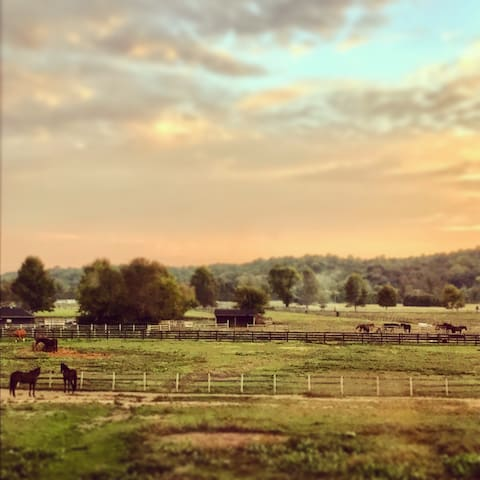 Overlook a Horse Farm in the Bluegrass State!