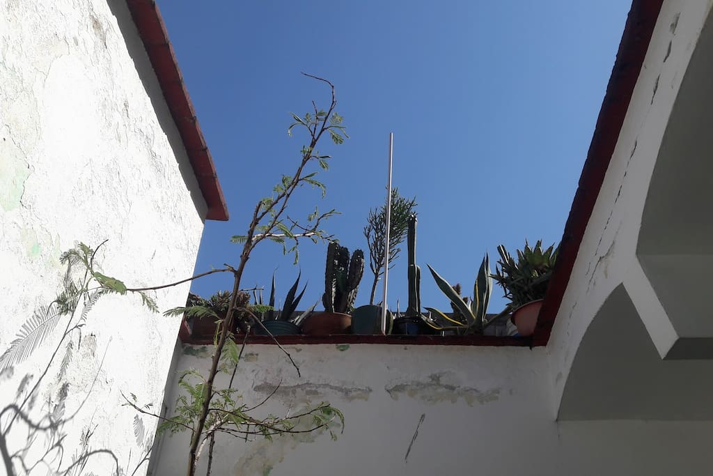 A blue, blue sky and my rooftop cactus garden