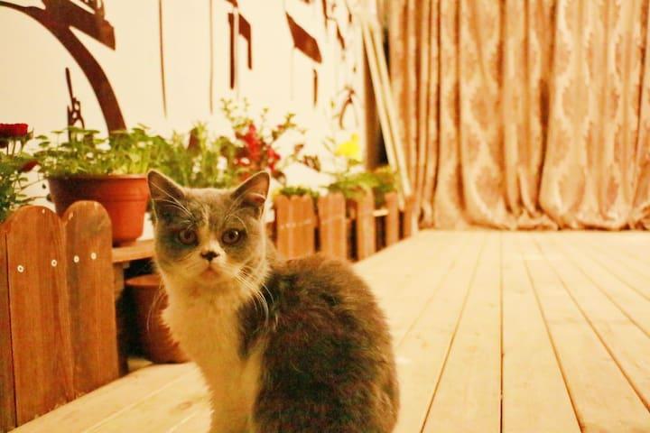 【默居.西湖Ⅲ】猫宠/日式榻榻米100寸投影,温馨暖居,独立卫生间带阳光小院,家里有两只猫