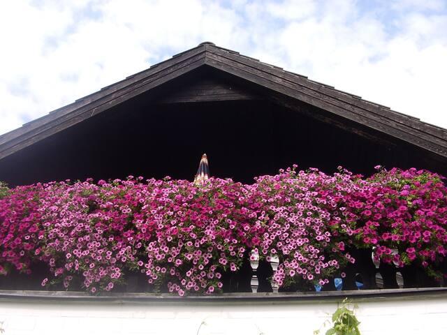 Lüchow, Mittelpunkt im Wendland