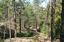 Ancient nature reserve forest, up the street, just 2mn walk from the house