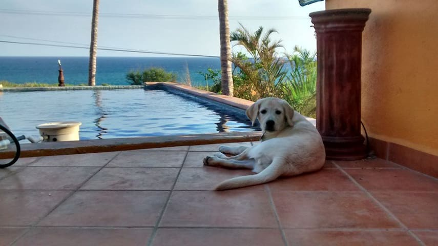 'Palapas'  Casa Mango - La Playa