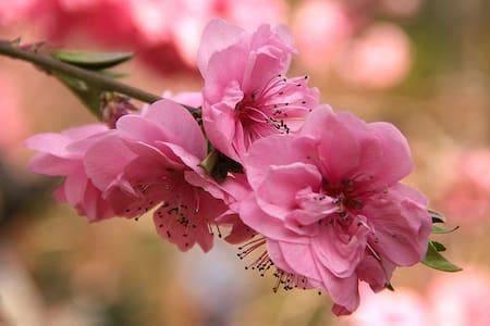"""Ferienwohnung """"Kirschblüte"""""""