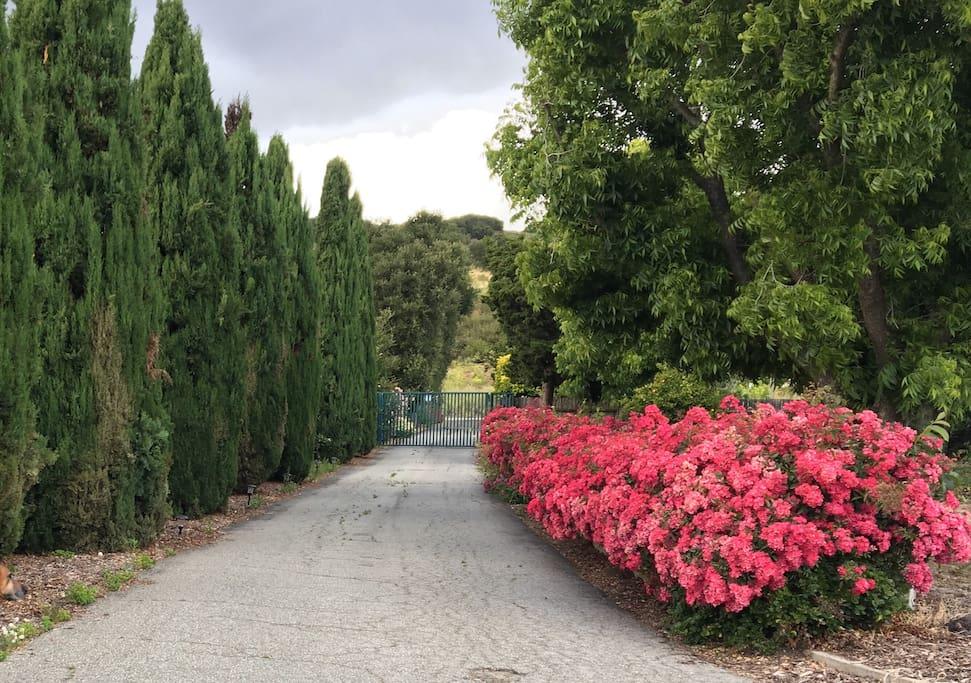 Driveway & Gate