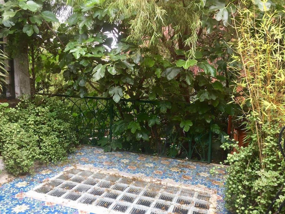 Terraza anexa a la habitación, llena de naturaleza.
