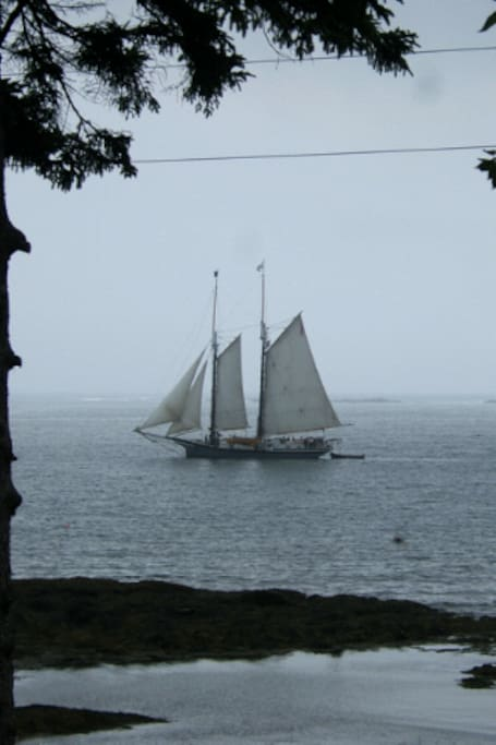 Windjammer sailing past the cabin into Burnt Coat Harbor