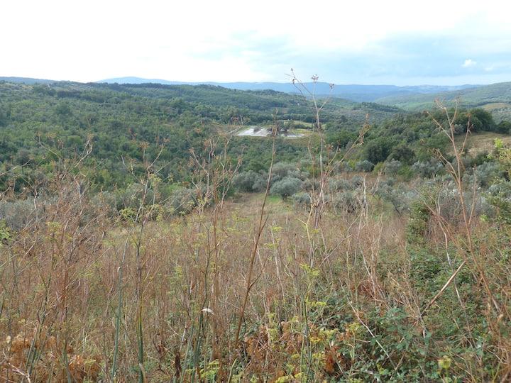 Podere mit Piscina in toskanischer Landschaft