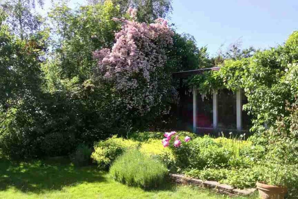 The garden in June .