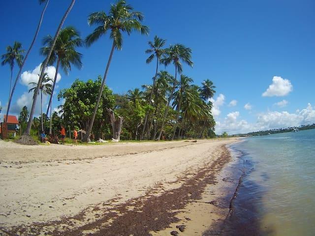 The best of Praia dos Carneiros - Tamandaré - Loteng