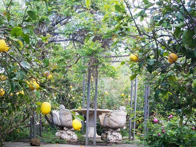 Ischia apartment Limoneto Garden