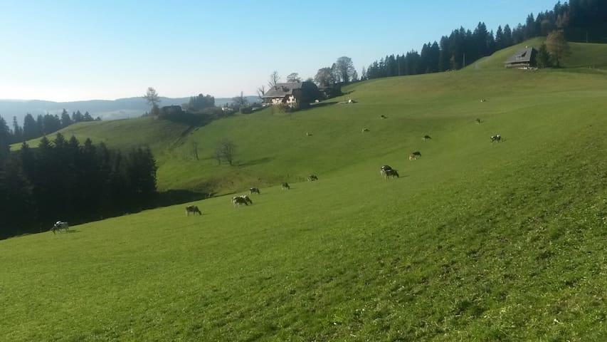 Unsere Kühe draussen am Gras fressen.