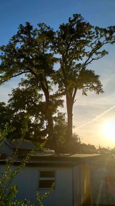 老胡同里上百年的老树