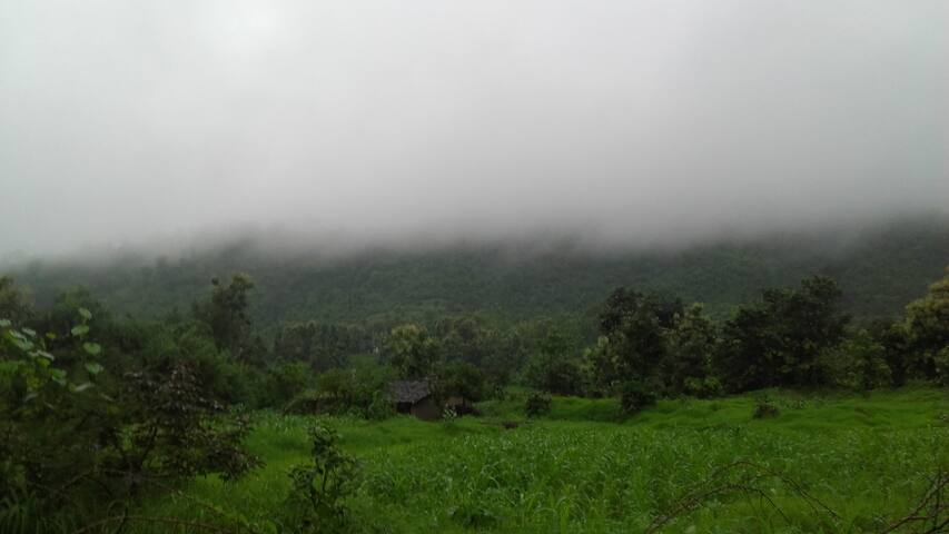Aravali Hilla under fog at singh home stay farm house