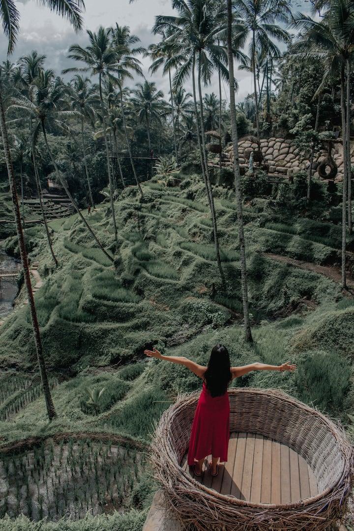 Bird nest with stunning rice terrace