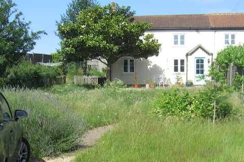 Sunny Suffolk cottage near the coast.