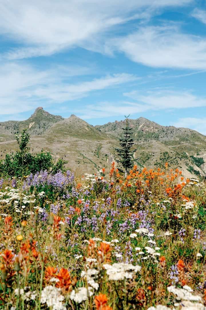 Summer wildflowers on Mt. St. Helens.